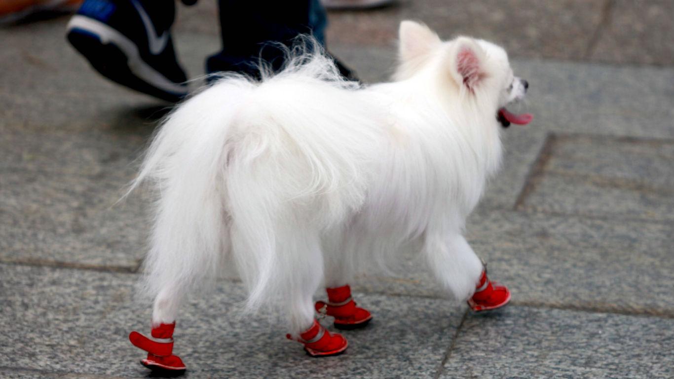 Vier Schuhe sind vier Schuhe zu viel