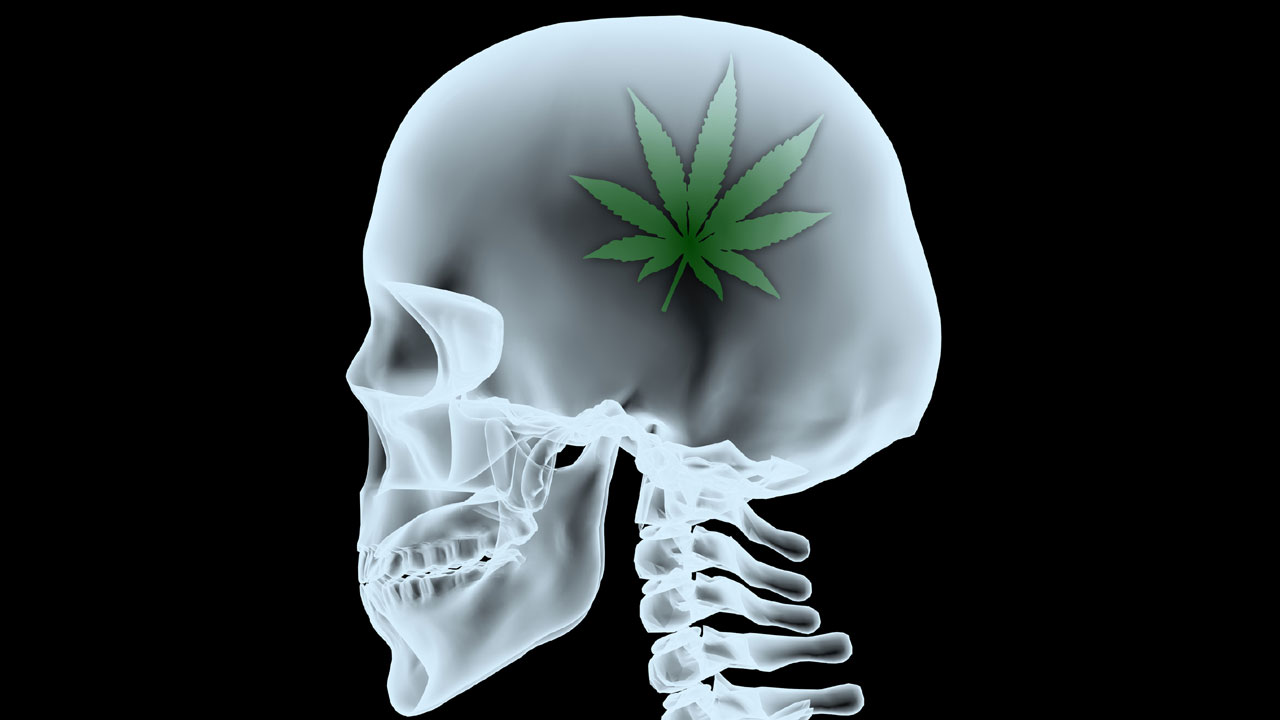 Drogenfabrik im Gehirn
