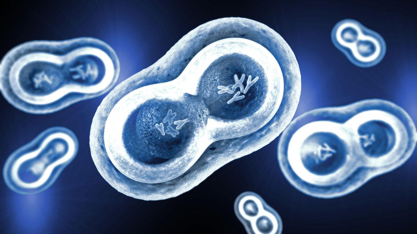 Wie wird aus einer Zelle ein kompletter Mensch?