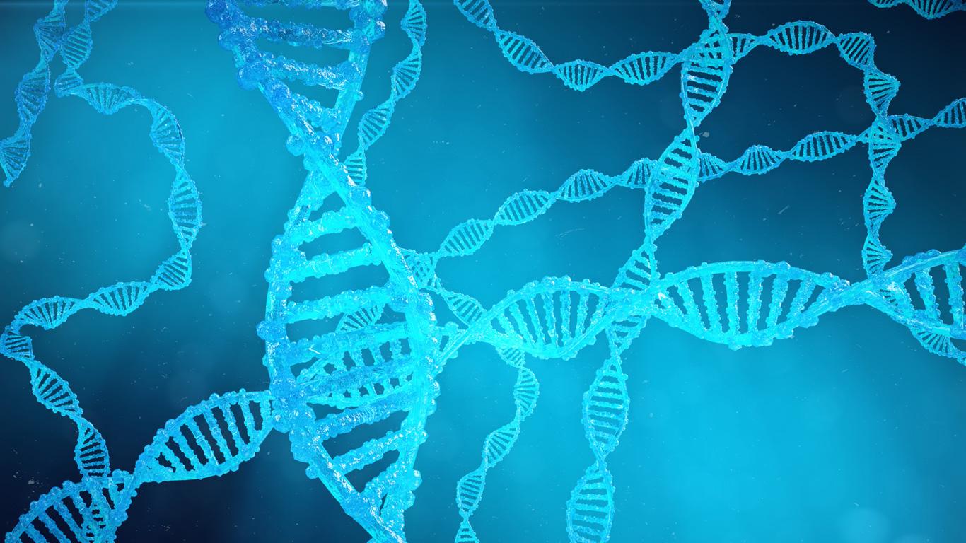 Wie reproduzieren Enzyme menschliche DNA?