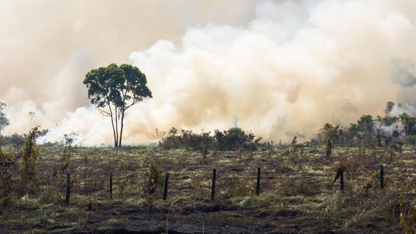 Verfüttern Konzerne den Regenwald?