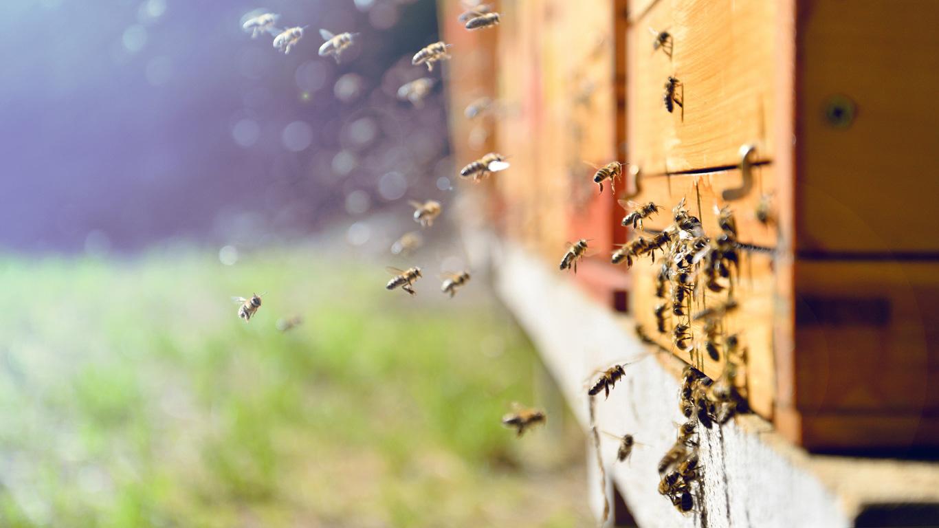 Wer löscht die Bienen aus?