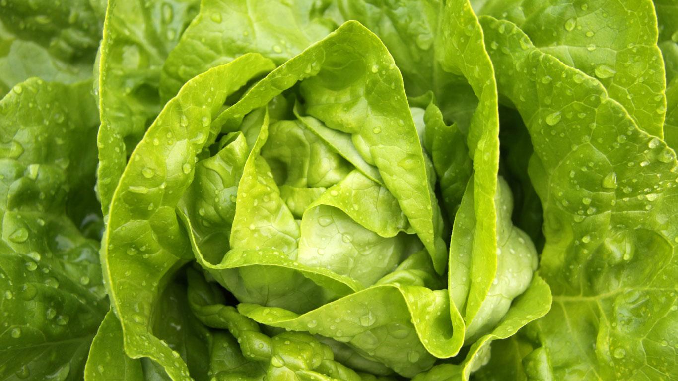 Salat ist gesund