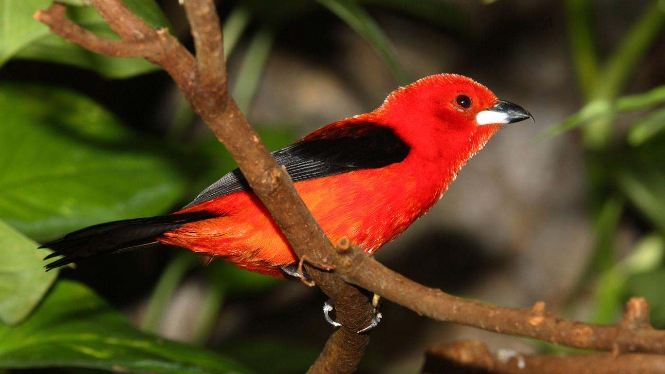 Vogelkonzert mit Leuchtspektakel