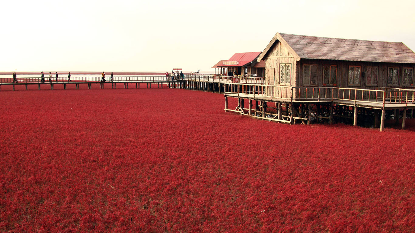 Der rote Strand in Panjin, China