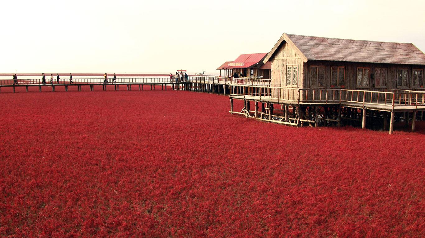 Der rote Strand in Panjin, China
