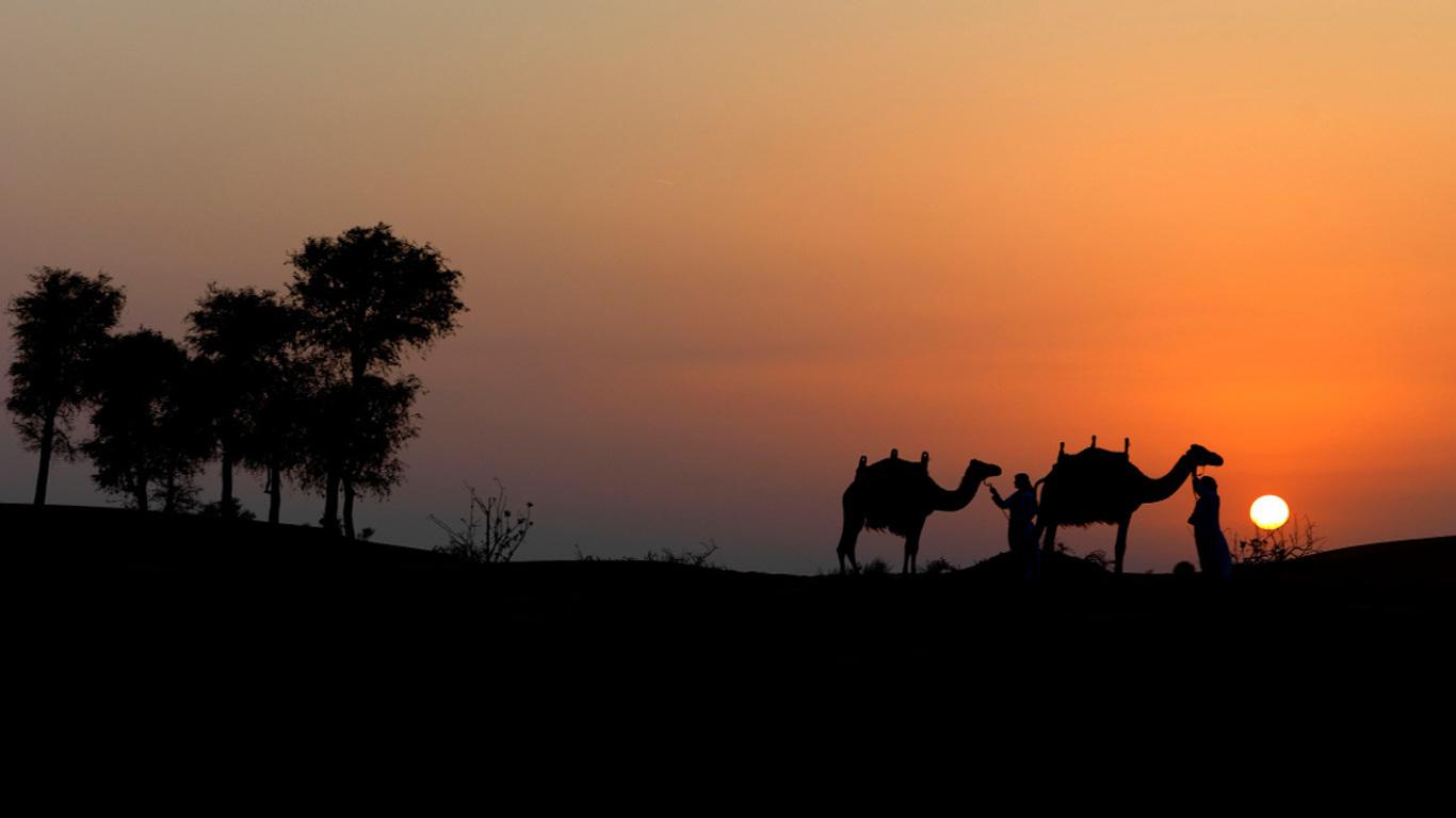 Was Kamele noch so können