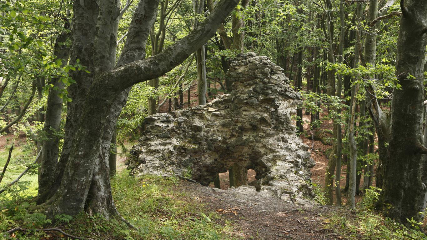 Der Wald des Goldes – Frauenstein, Oberpfälzer Wald (Bayern)