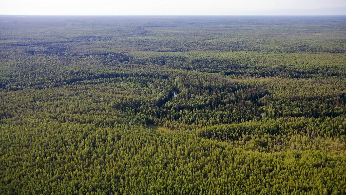 Endloser Urwald der Nordhalbkugel