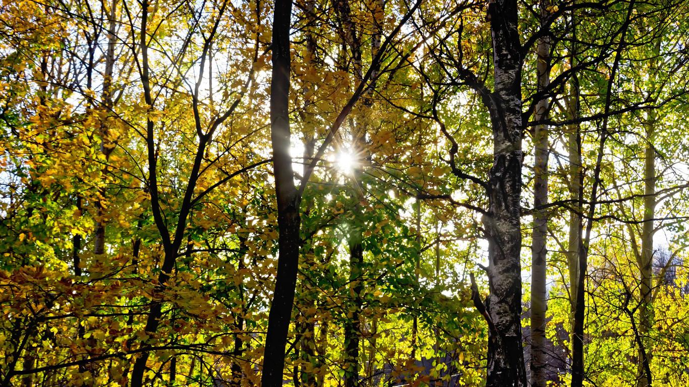 Sonnenlicht strahlt durch Blätter eines Waldes