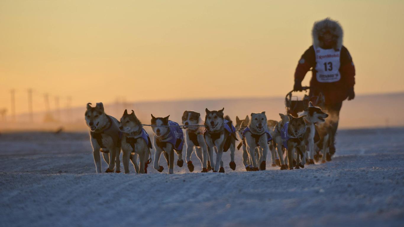 Das legendäre Hundeschlittenrennen