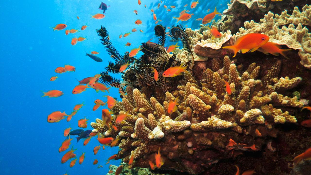 Pumpkin Island Great Barrier Reef, Australien