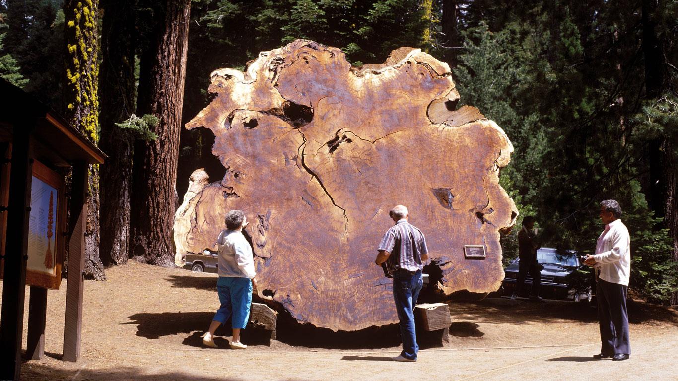 Querschnitt eines Baumstammes