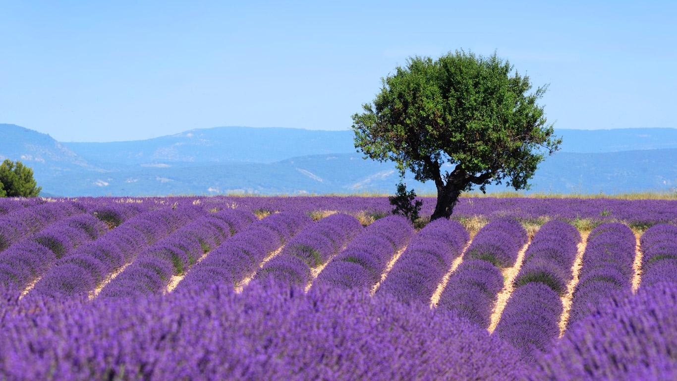 Leben wie Gott in Frankreich