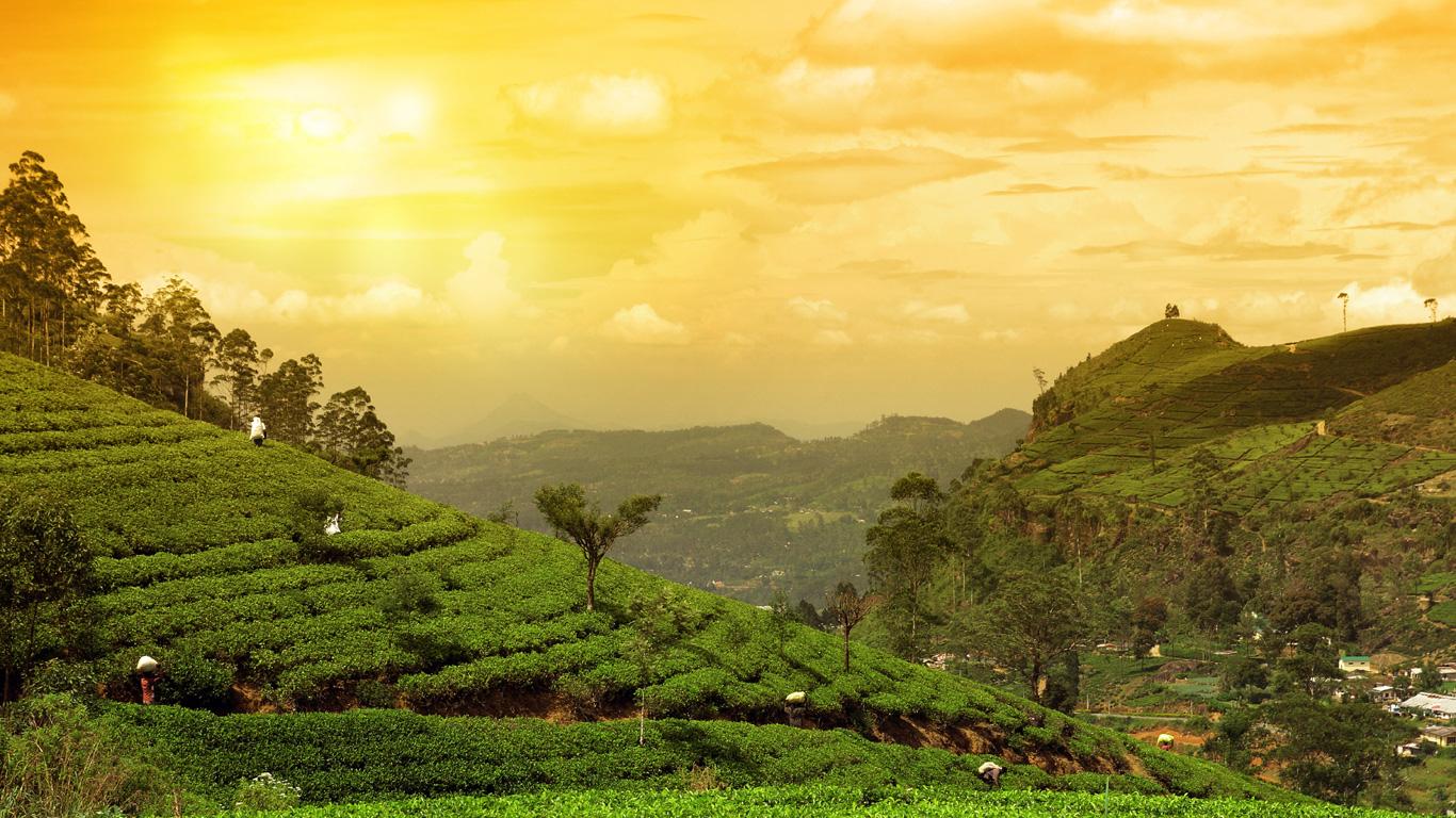 Sri Lanka – Teeplantagen soweit das Auge reicht