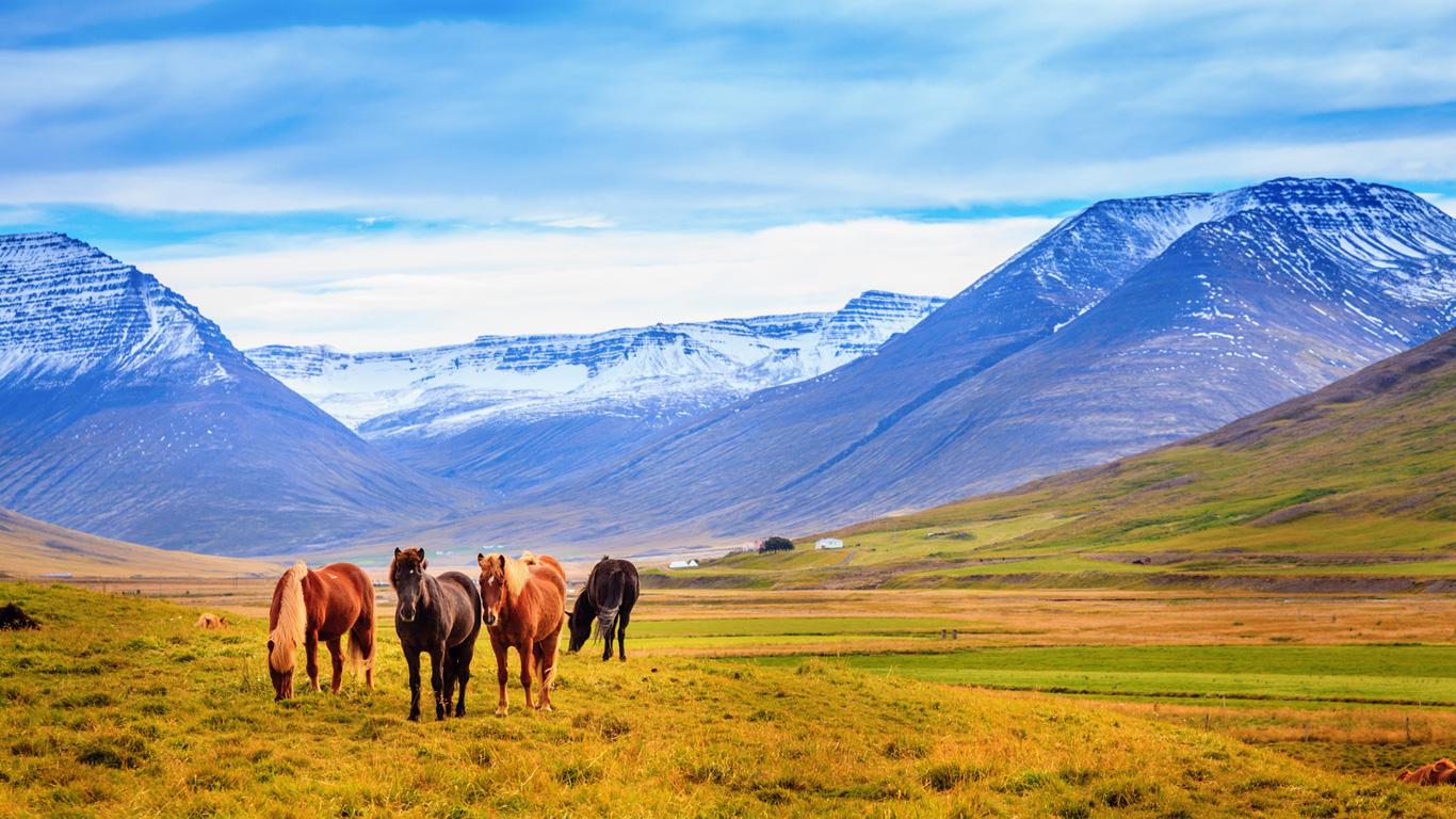 Island – das Land der Vulkane und Geysire