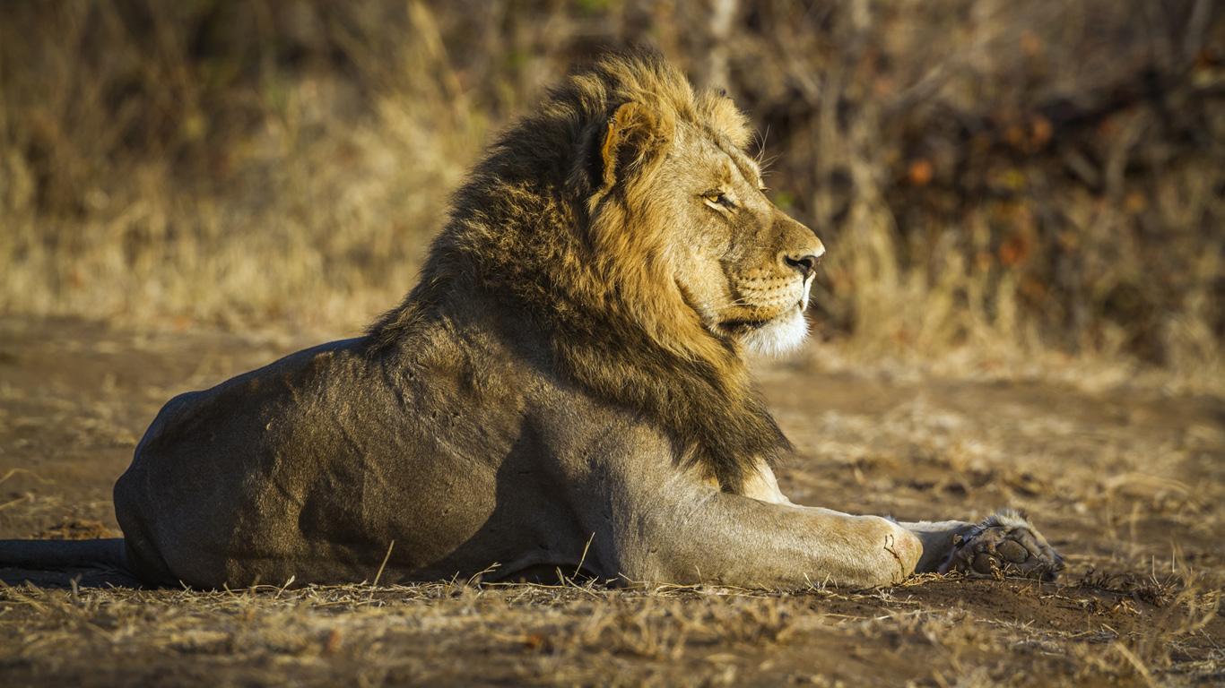 Kruger-Nationalpark