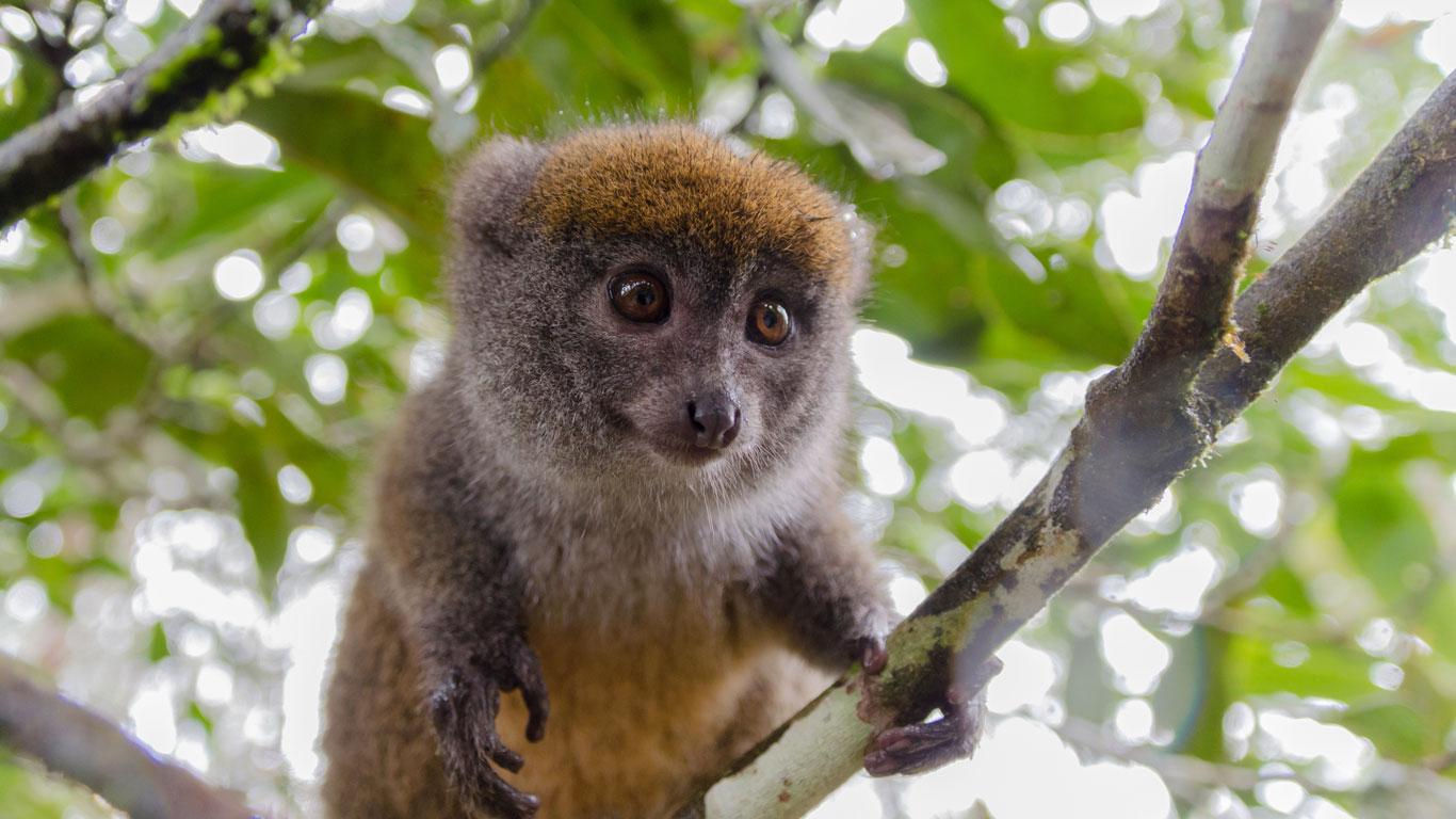 Lemuren bestaunen in Madagaskar