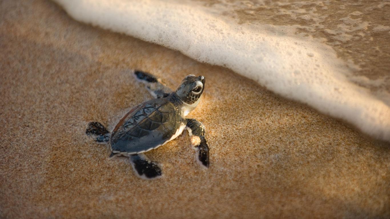 Schildkröten füttern in Französisch-Polynesien
