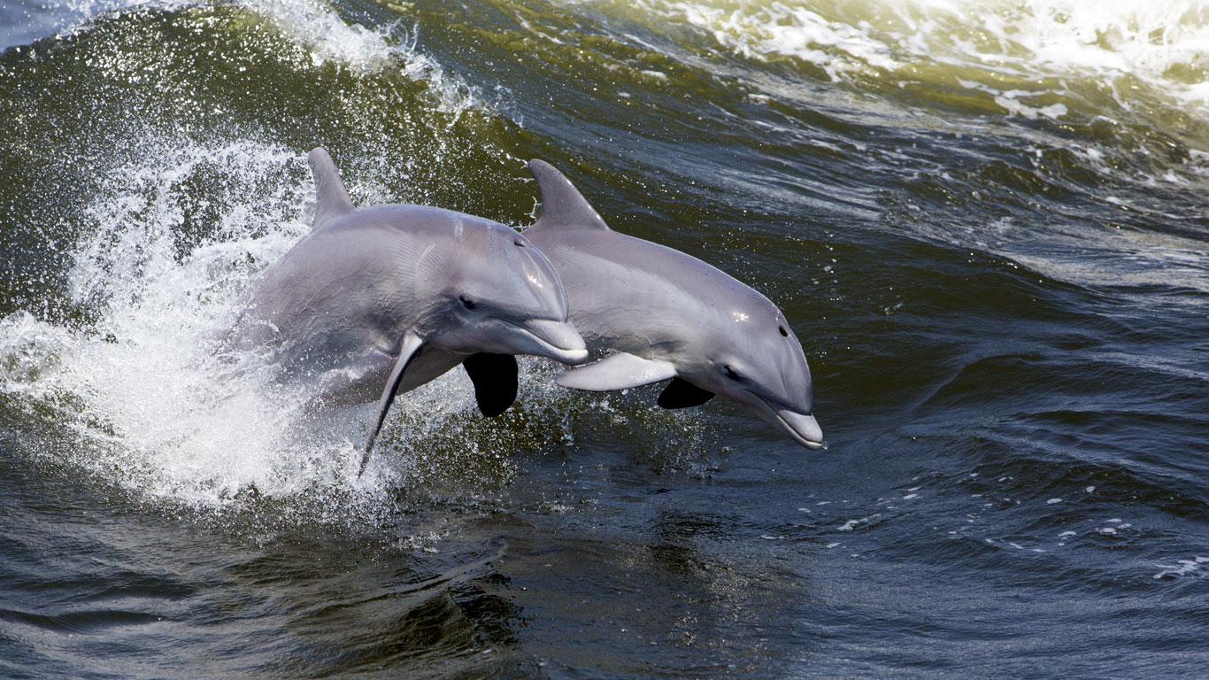 Delfine beobachten in Großbritannien