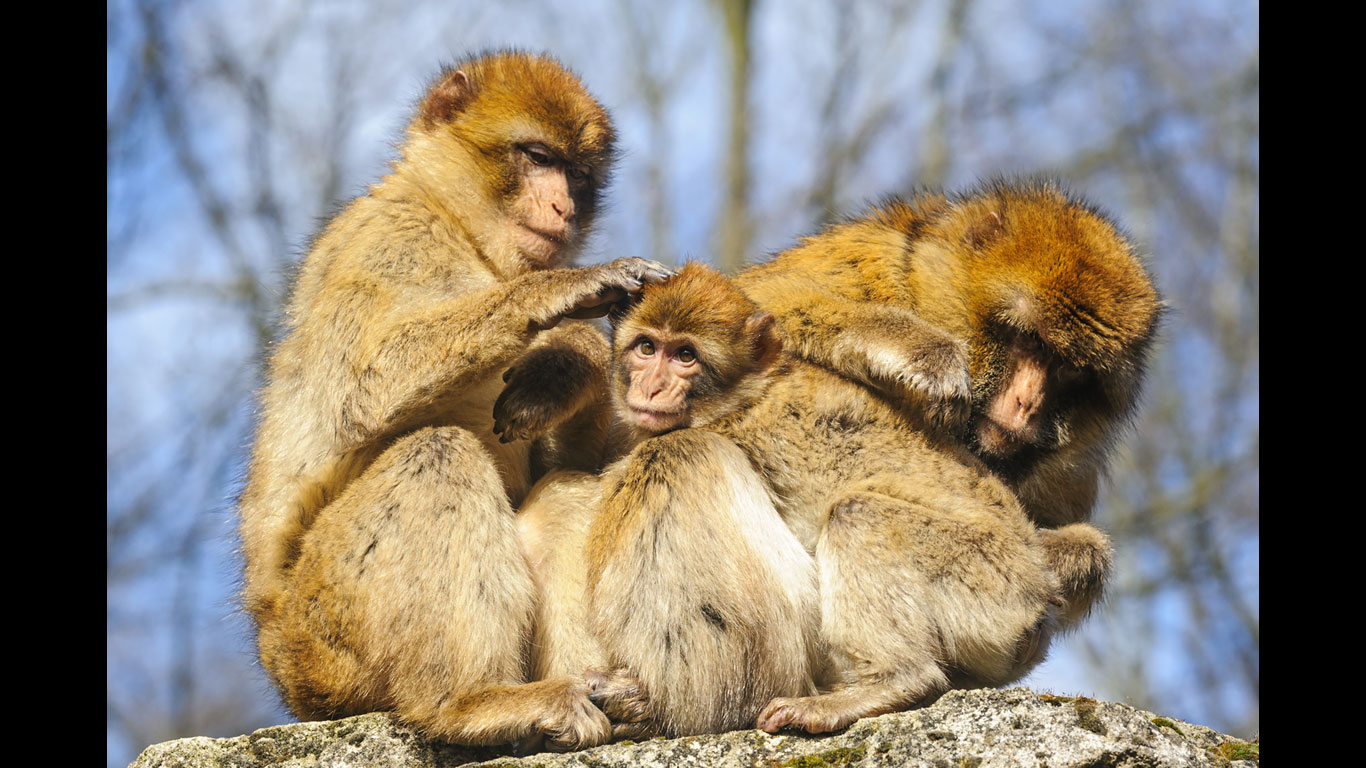 Affen füttern in Frankreich