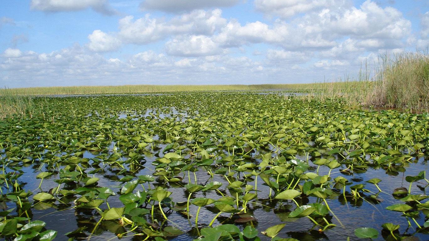 Miami – Zu einem Indianerreservat in den Everglades