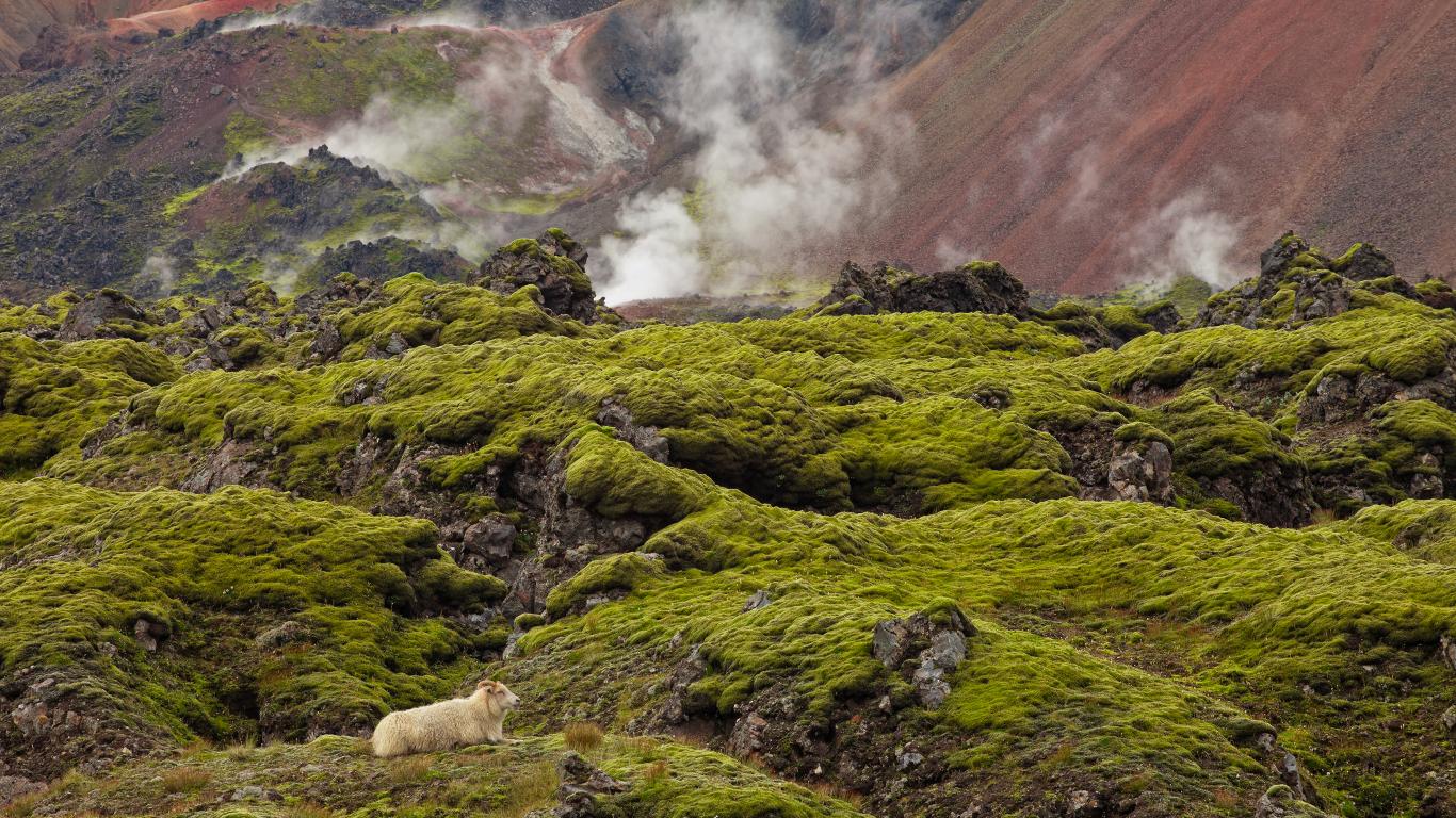 Island: positive Geburtsstatistik