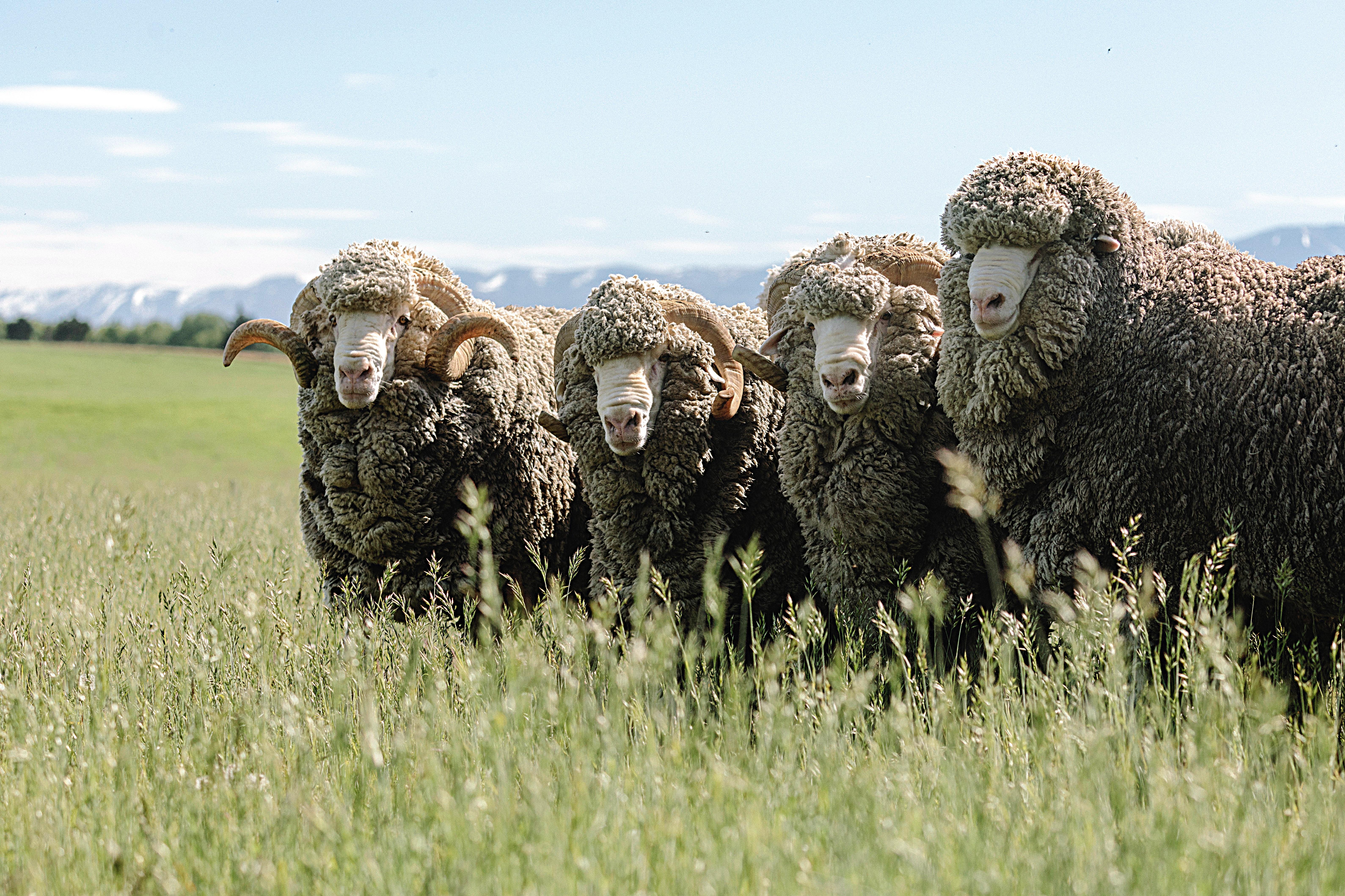Wolle schont die Umwelt