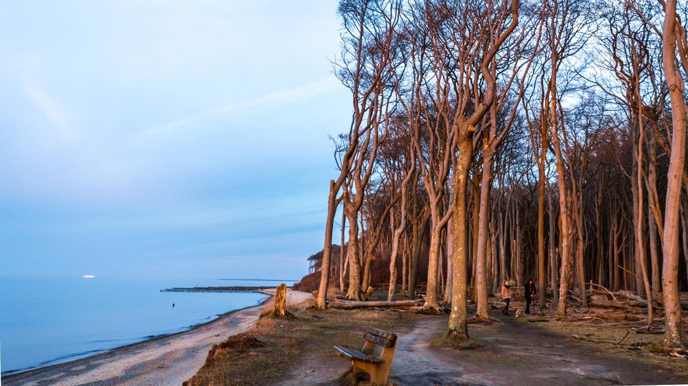 Gespensterwald: Geisterhafte Riesen (Nienhagen, Mecklenburg-Vorpommern)