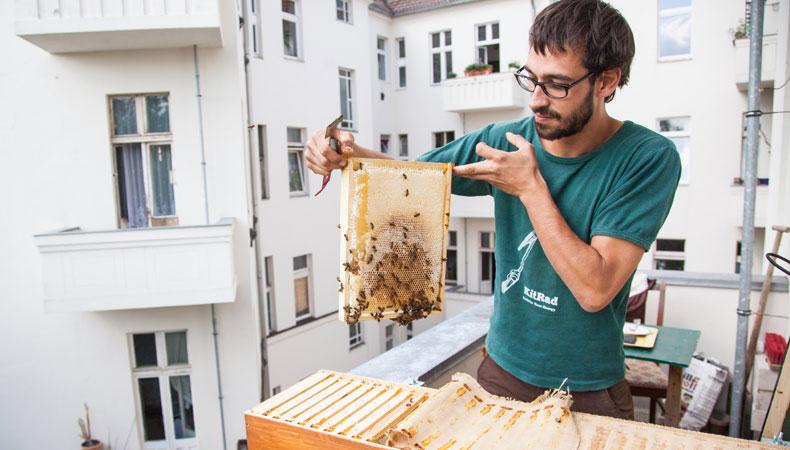Die BienenBox ...