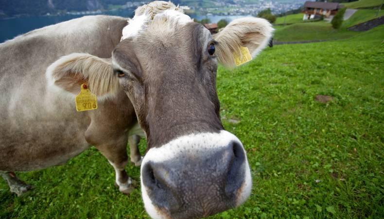 Tierschutz in der Milchproduktion