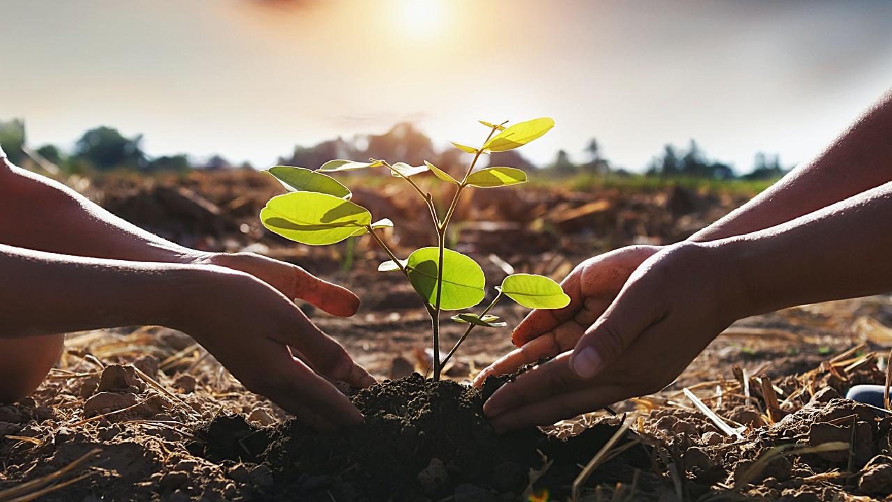 Pflanze einen Baum