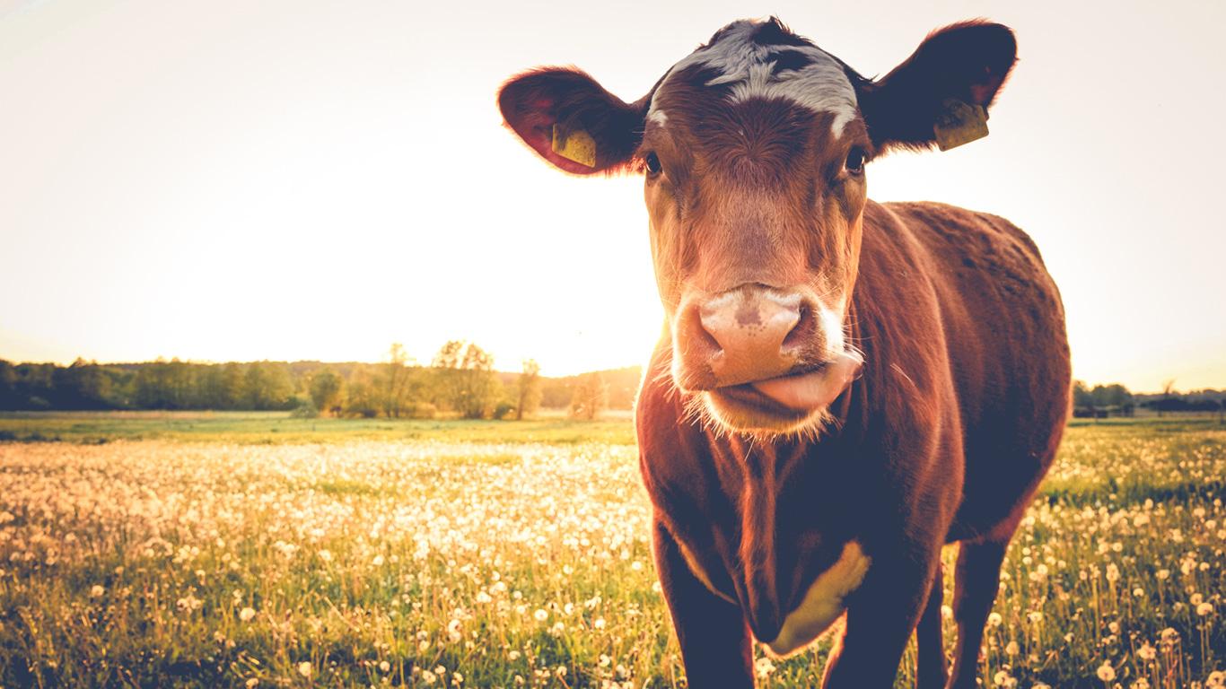 1 Kilo Rindfleisch – 15.500 Liter Wasser