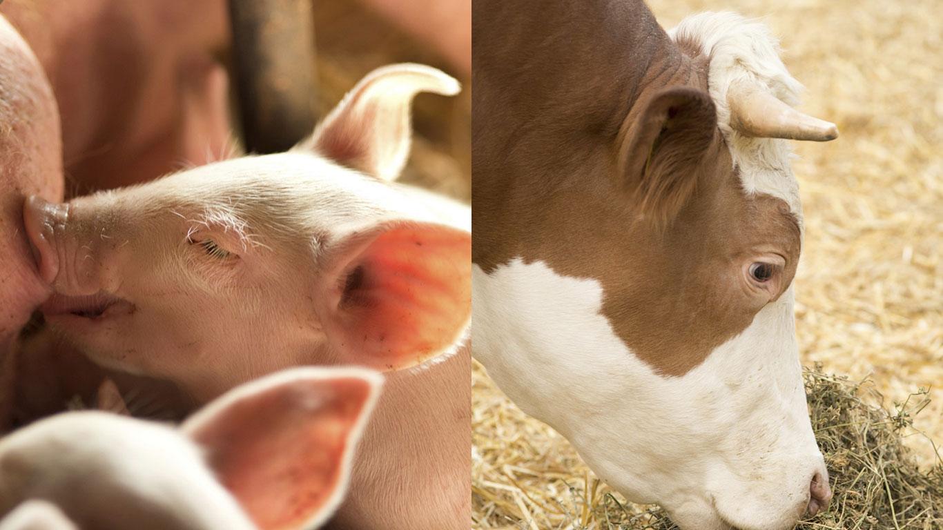 Schweine- und Rindfleisch