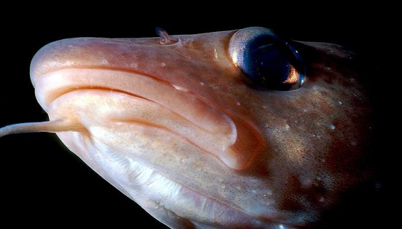 Schrumpfende Fische
